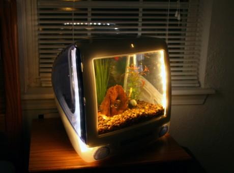 computer_monitor_aquarium