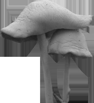 mushroom_001