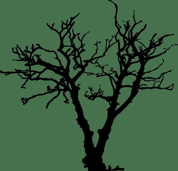 tree_002
